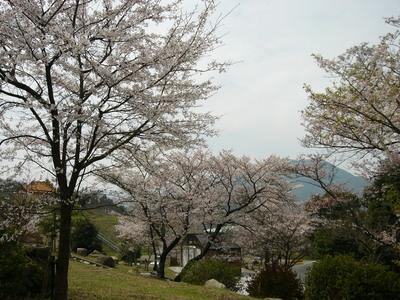鳴滝さくら-山口県,山口市,ブライダルフェア,結婚式場,ウェディング